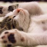 Délutáni alvás